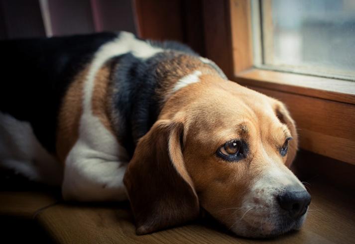 Собака после болезни