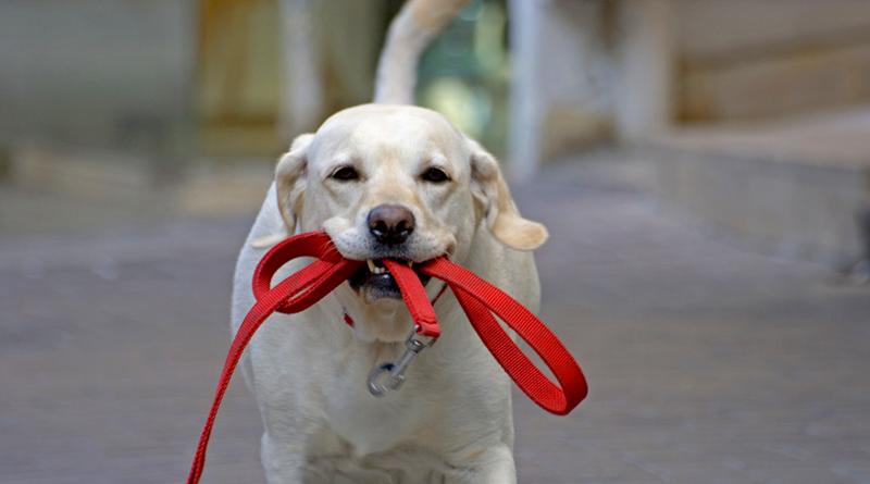 dog_walk_3